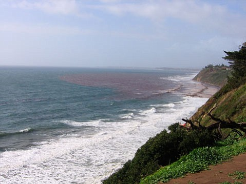 The runoff from Arroyo Burro Creek is visible from the Douglas Family Preserve.
