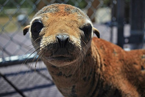 Fundraiser party aboard the <em>Condor Express</em> will help raise funds for S.B.'s seals and sea lions.