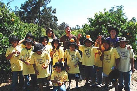Orange picking in Carpinteria.