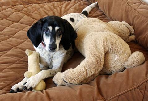 Foster doggie Annabelle.
