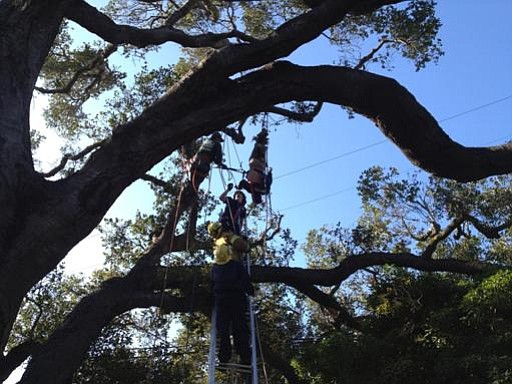 Santa Barbara City Fire crews rescue a tree trimmer who was electrocuted by a power line