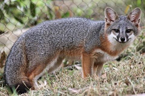 S.B. Zoo's newest resident, Beauregard