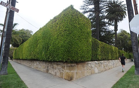 <b>Looming:</b>  Shrubbery walls the corner of Santa Barbara and Islay streets.