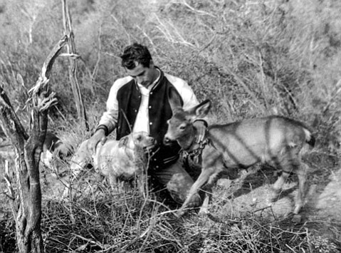 <b>LEGENDARY:</b> Here, Bill Richardson introduces one of his dogs to Purina, the family's pet deer who was known to chase cars on Mountain Drive.