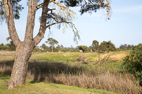 Former Ocean Meadows golf course is slowing transforming itself into an open space area.