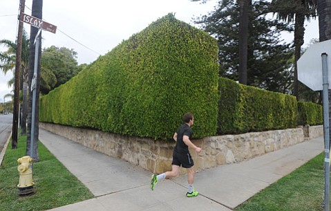 <b>GRATING GREENERY:</b> Hedge wars between neighbors have prompted attention and action from City Hall.
