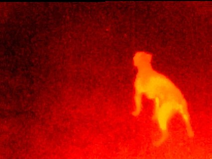 Seek Thermal reps say consumers can use the smartphone cameras to check their yard for predators before letting pets out at night