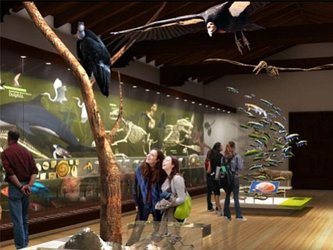 An artist rendering of what the museum's marine and paleo halls will look like after the remodel