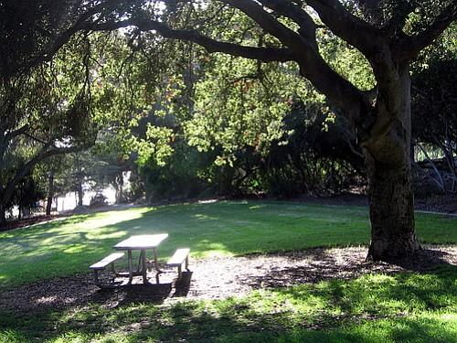 A sunny afternoon at Orpet Park on Santa Barbara's Riviera.