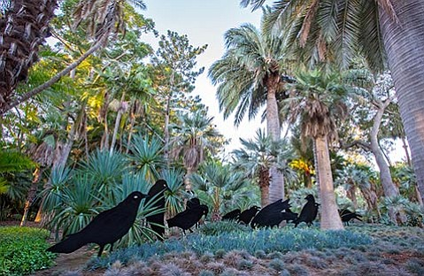 "<b>BIG BIRDS:</b> ""Murder of Crows"" is an artwork that's recently been installed in Lotusland's blue garden as part of <i>Flock</i>."