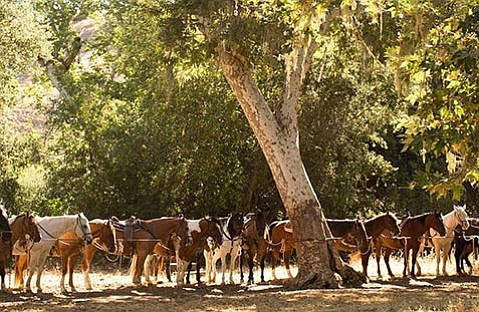 <b>HORSES AND BICYCLES:</b>  Alisal Guest Ranch has myriad offerings for visitors including horseback riding and cycling tours