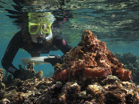 Author Sy Montgomery makes a stop to promote her new book, <em>The Soul of an Octopus</em>.