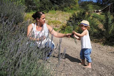 <b>FAMILY FUN: </b> Jessica Armstrong and her two-year-old daughter, Clementine, pick lavender during a recent event at Rancho Palomino.