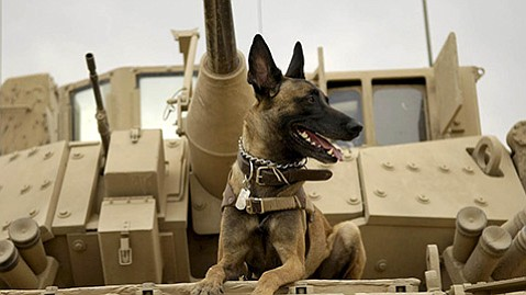 <b>AMERICAN SNIFFER:</b>  A Marine dog with PTSD gets sent to the family home of his killed-in-action handler in <i>Max</i>.