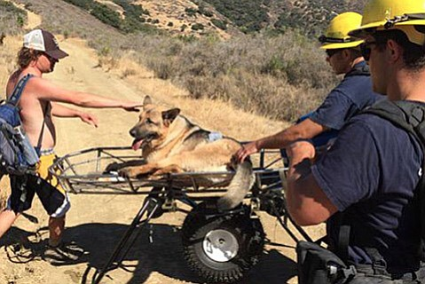 Firefighters tend to the distressed dog.