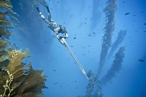 Shark attack off santa cruz island for Deep sea fishing santa cruz