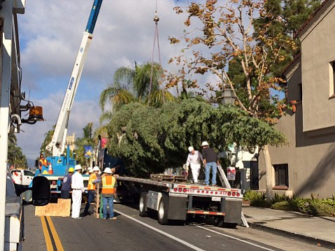 Freshly arrived from Fresno's Shaver Lake, the State Street holiday tree is craned off its truck and will ultimately stand just above State and Victoria streets.