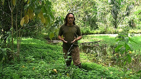 "<b>JUNGLE LOVE:</b>  Pictured above is a video still from the art project ""The Land Grant: Forest Law"" by Ursula Biemann and Paulo Tavares."