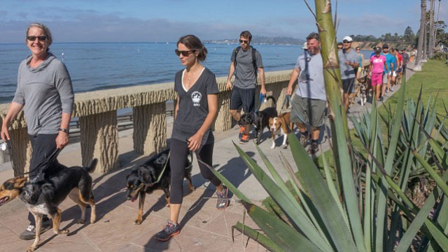 <strong>NO BEACHSIDE BARKING: </strong> The promenade along Butterfly Beach is just one place this pack of dogs-in-training may be found.