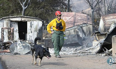Search and Rescue Team dog handler Shelia Malavasi and her four-year-old German Shepherd, Rica, traveled to Kern County to assist in Erskine Fire recovery efforts.