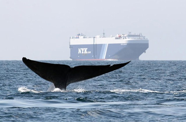 By reducing speed to 12 knots, large-container cargo ships decrease greenhouse gas emissions and the likelihood of killing whales, says a report by Protecting Blue Whales and Blue Skies.
