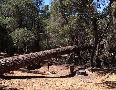 A dead tree fell Wednesday on an unoccupied Figueroa campsite, prompting officials to close 33 campsites on the mountain.