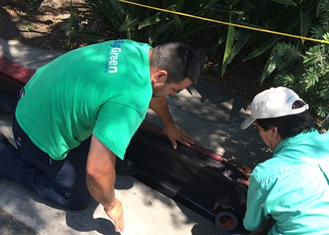 Juan Perez (left) and Roger Ayala of Big Green place silt mesh over State Street drain openings, part of the city's preparations for Old Spanish Days.