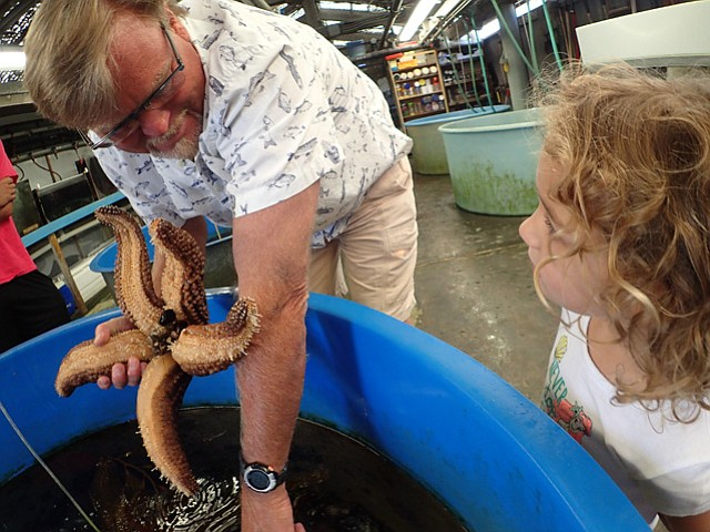 <b>STAR STUDENT: </b> Scott Simon shows Madeline, 4, a sea star.