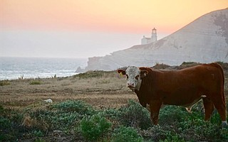 The 24,364-acre Cojo Jalama Ranches, also known as the Bixby Ranch, will now be called the Jack and Laura Dangermond Preserve.