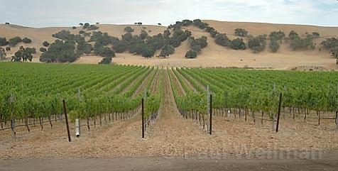 Firestone grapes and Chamberlin Range