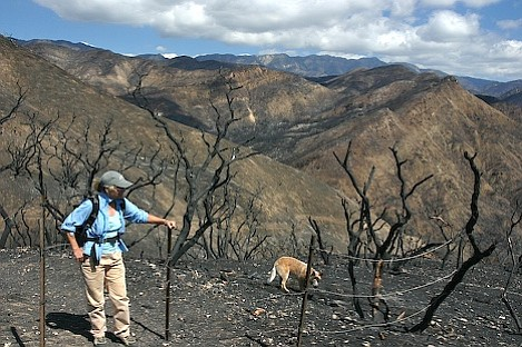 Los Padres Forest Association Board member Susie Thielman surveys the damage to the upper parts of the Santa Cruz drainage.