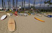 All the boards, lined up and ready to paddle.