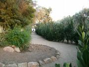 The trail through San Ysidro Ranch.