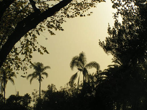 Trees at Alice Keck Park Memorial Gardens silhouetted against the smoky haze.