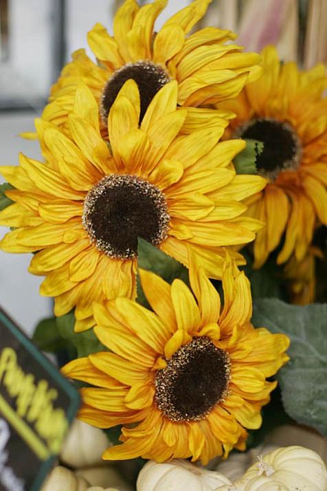 Fall Hues in Bloom:  A seasonal display at a Santa Barbara market in October.