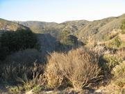 The Arroyo Hondo Preserve snakes back in the Gaviota Coast's wooded, rocky canyons.
