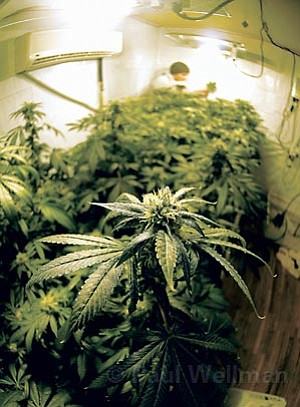 Then there's medical marijuana, which is being sold in a haze of legality (the state's cool with it, the feds aren't) at numerous shops around Santa Barbara. Grow rooms (such as the one pictured above) are taking root in many neighborhoods, and the city is finally starting to put regulations down on the books about this curative cannabis. Will everything remain groovy in 2008? That's up to the feds.