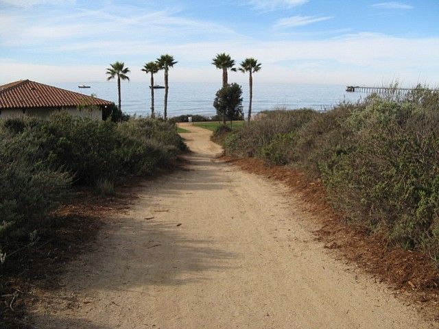 The access trail to Haskell's Beach.