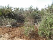 A native plant restoration project near Haskell's Beach.