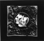 <em>Meditations in Silver: Photographic Studies by Paul Caponigro</em>