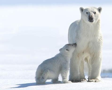 <em>Arctic Tale</em>