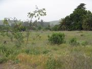 Vacant Goleta land owned by John Price.