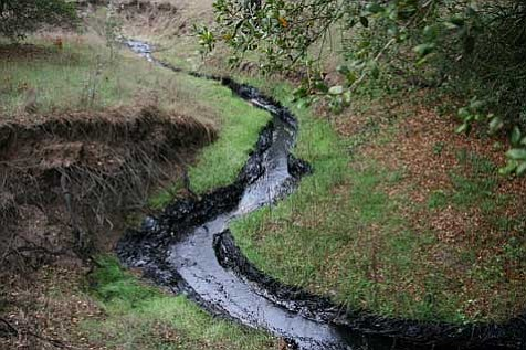 Taking a substantial toll on plant and wildlife, not to mention water-table supplies, leaked oil makes its way down a seasonal creek on Greka's Zaca lease, also owned by the Firestone family, in early January.
