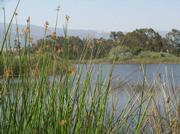Lake Los Carneros.