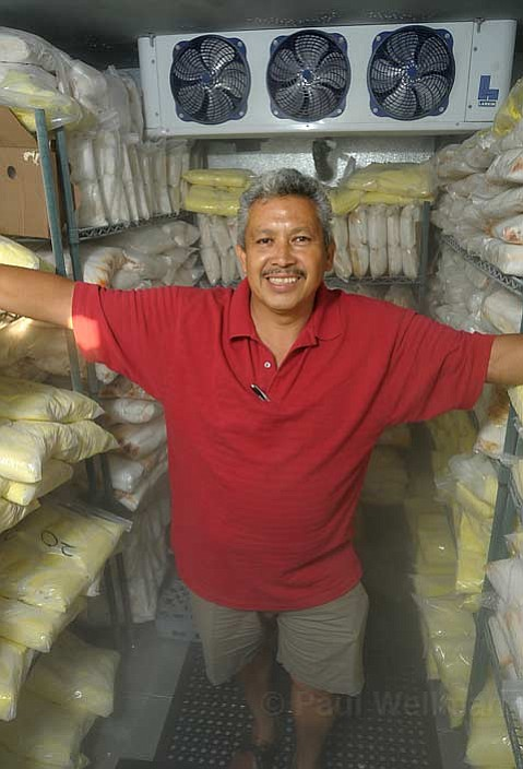 "Francisco ""Chico"" Bautista gets ready for Fiesta with lots and lots of tamales."