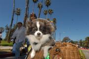 2006's Big Dog Parade