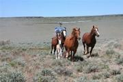 An ill-fated roundup at the Sheldon Wildlife Refuge in July 2006.