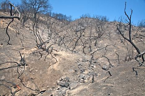 Small gullies and scorched hillsides like this above Goleta could cause massive erosion this winter.
