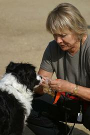 Search dog Nessie gets fed by her owner Eva Cecil.