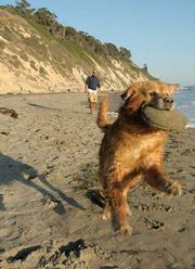 "Hendry's Beach aka ""The Pit."""